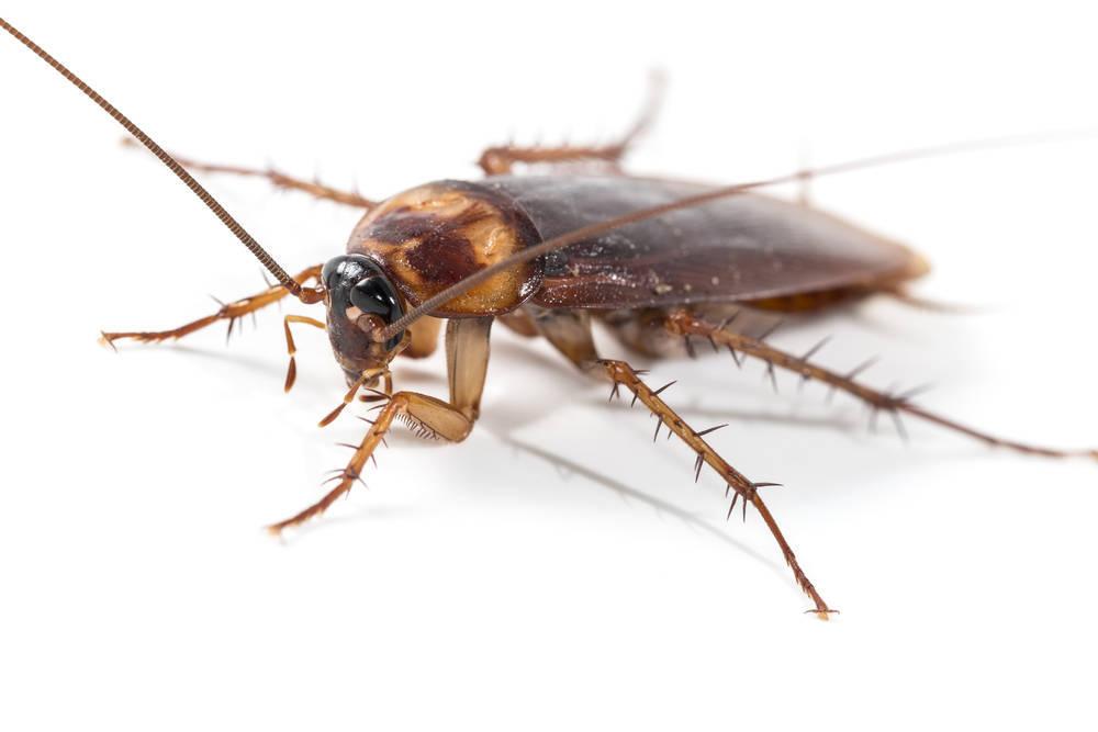 Prevención de plagas en las cocinas