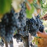 España y su tradición vinícola como país mediterráneo que es.